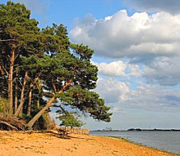 Visit Brownsea Island by boat